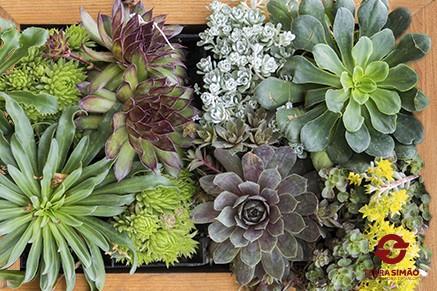 Como fazer um jardim vertical de suculentas